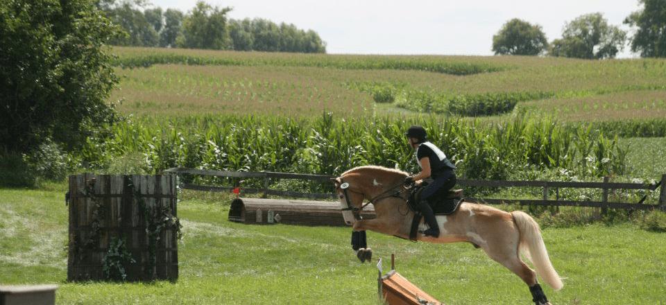 horsebackriding-stlouis5