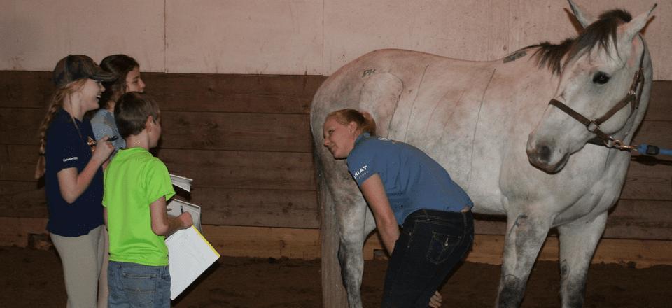 horsebackriding-stlouis8